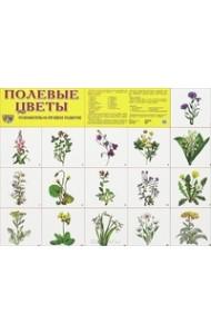 Полевые цветы. Демонстрационный плакат