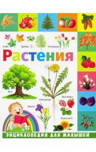 Растения. Энциклопедия для малышей