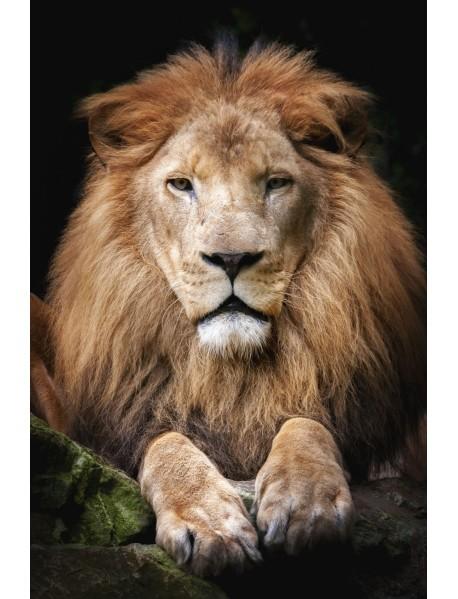 "Раскраска на картоне ""Гордый лев"", формат A4"