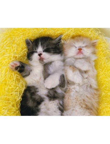 """Раскраска по номерам на картоне """"Милые котики"""", формат А3"""